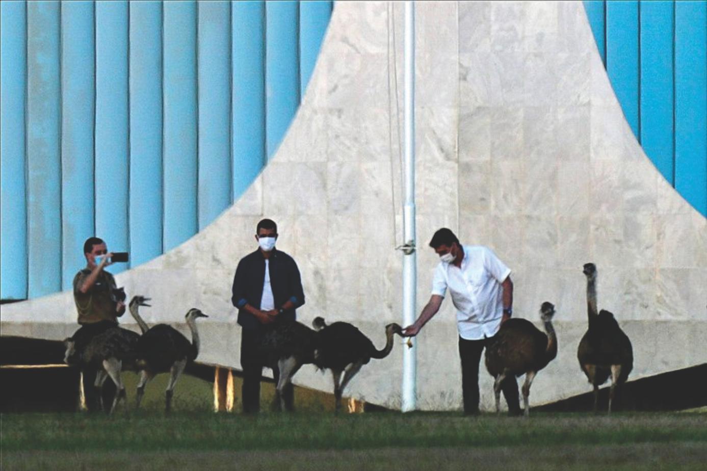 A Bolsonaro lo mordió un emu