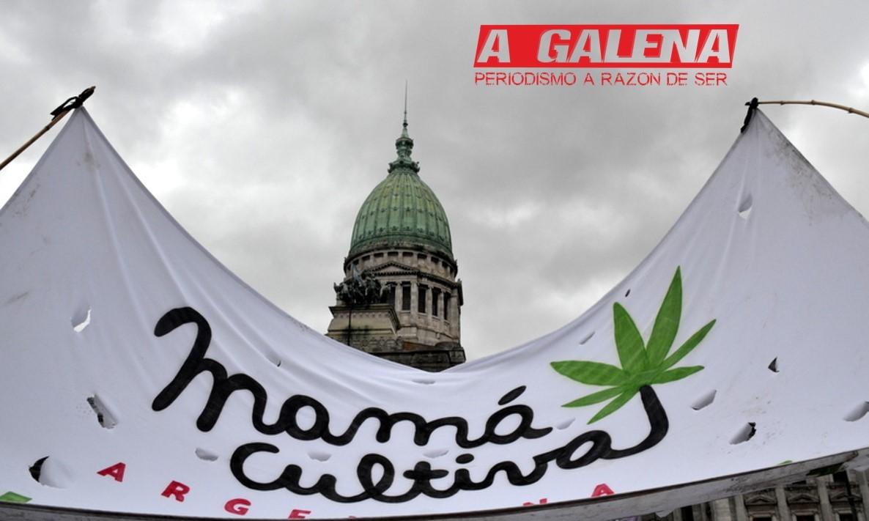 Se podrá cultivar cannabis medicinal